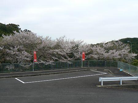 三熊山の桜